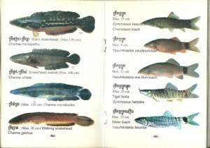 poissons_eau_douce_cambodge_002